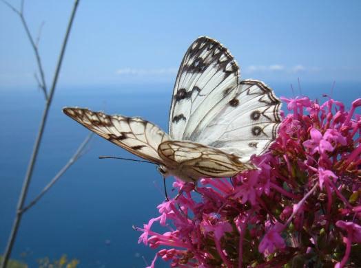 donna energia benessere e bellezza volare farfalla